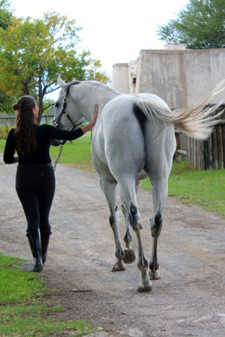 Courtney Barry walking Blue Tiger, photo by Josh Barry