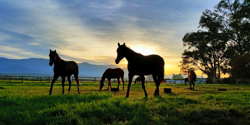 Riverton Stud Farm going green