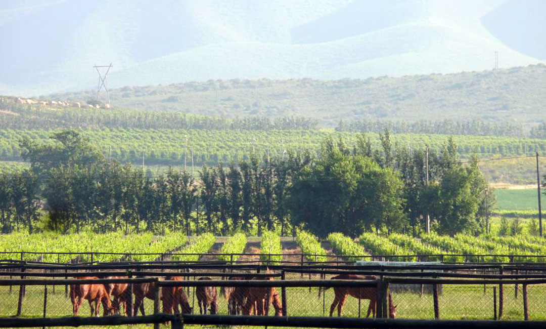 Robertson Valley of Wine, Horses & Roses