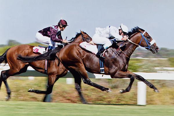 Domino Man Gr1 Guineas & Gr1 Horse Chestnut Stakes winner
