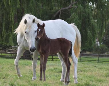 Foal by Lesley Greenwood